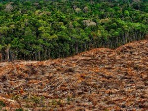 deforestation-en-amazonie