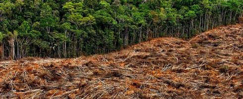 Les forêts, poumons et «ventilateur» de la Terre