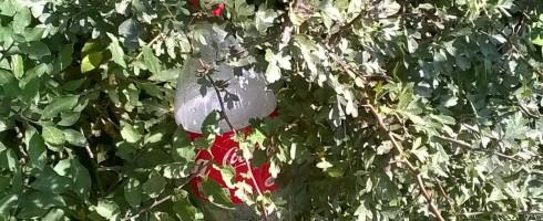 Un nettoyage imprévu – Audruicq – le 23/08/2015