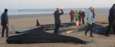 Des «baleines» échouées à Calais